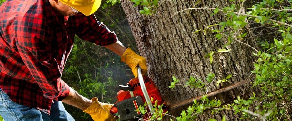 JC Tree Care Tree Services