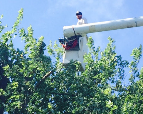 JC Tree Care Tree Removal Front Royal VA
