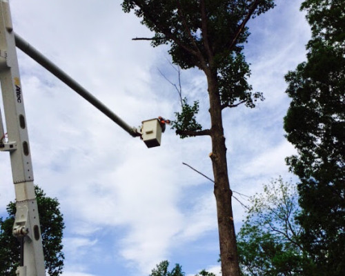 JC Tree Care Tree Removal Fort valley