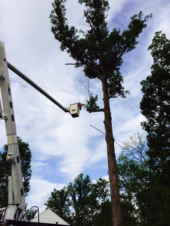 Tree service truck cutting off branches