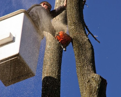 JC Tree Care Inc. Tree Removal