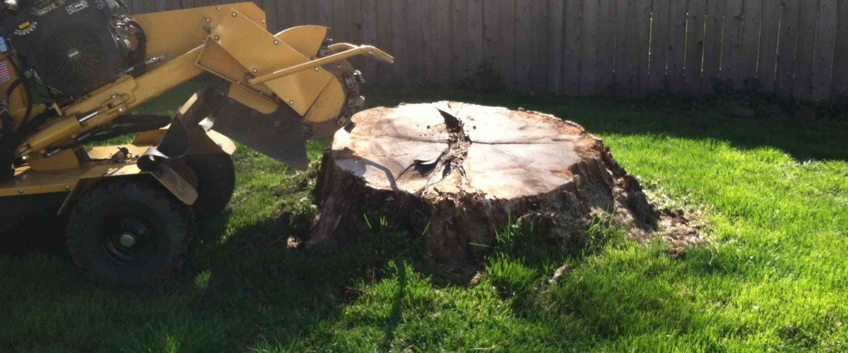 JC Tree Care Stump Removal Services