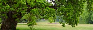 JC Tree Care Tree Services