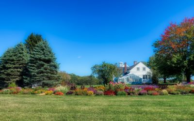 How To Optimize Trees For Maximum Property Value