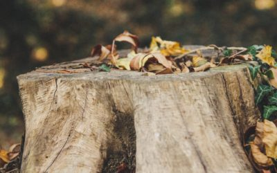 Top Reasons to Remove Old Tree Stumps from Your Property