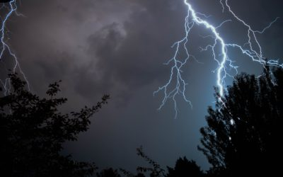 Tree Struck By Lightning? Here's What To Do