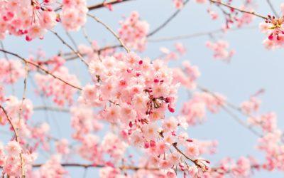 Spring Tree Care Checklist