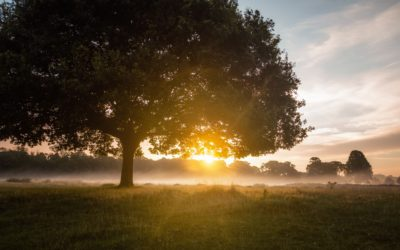 Tips to Properly Care for Your Oak Trees